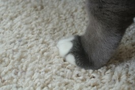 Left front paw