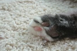 Right front paw