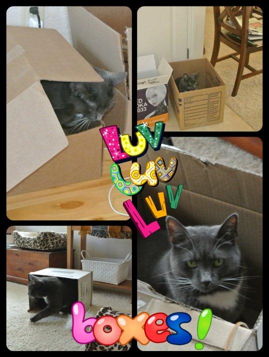 2014 box day