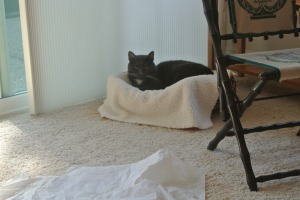 My Big Cat Leopard Bed...also from Dad P
