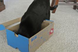 Oh, nice box!