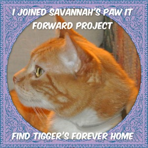 paw it forward badge for blog post