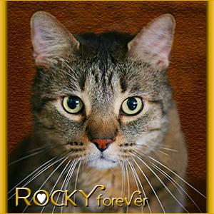 Rocky, Forever