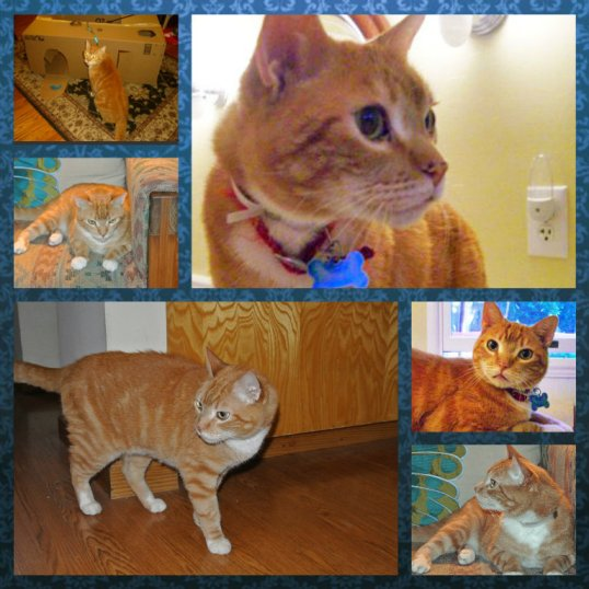 Tigger early photo collage