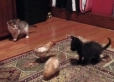 Tango and Charlie meet rescued chicks