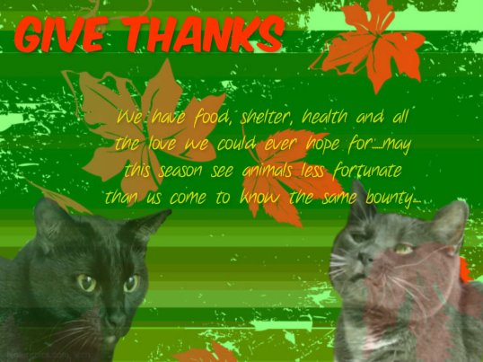 thanksgiving card from the girls