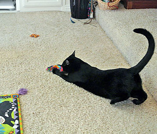 Yee Haw!!! Got'cha little nip toy! Oh, Hi Savvy, didn't see you over there