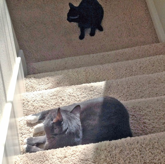 I expect 12 pieces of your kibble to pass me on this stair
