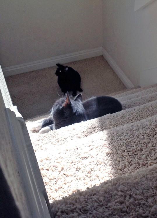 Dad P??! Make Savvy move so I can get upstairs