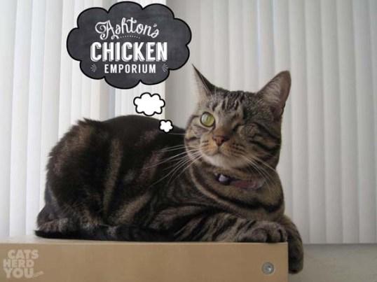 ashton chik emp