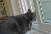 Channeling my outside cat