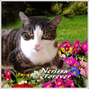 Nerissa, Forever Sidebar Badge