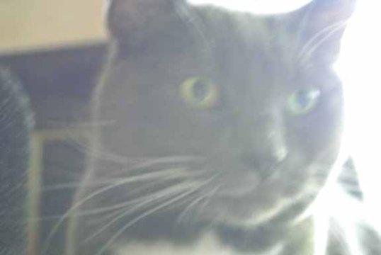Ummm...Mom L? Do I look blurry to you?