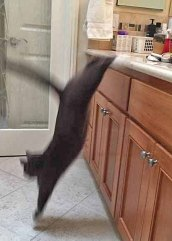*leap* look how long I am!!