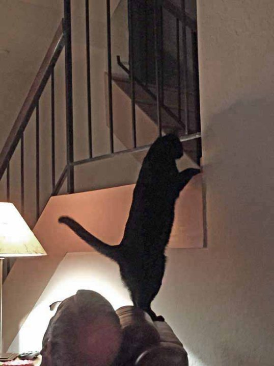 Dad!! I can reach the entry way from here now!!