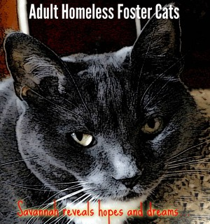 Adult Homeless Foster Cats