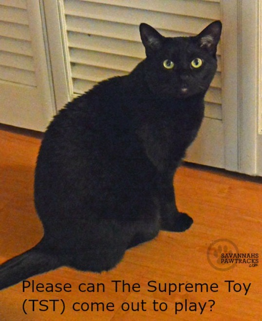 Can The Supreme Cat Toy come out to play?
