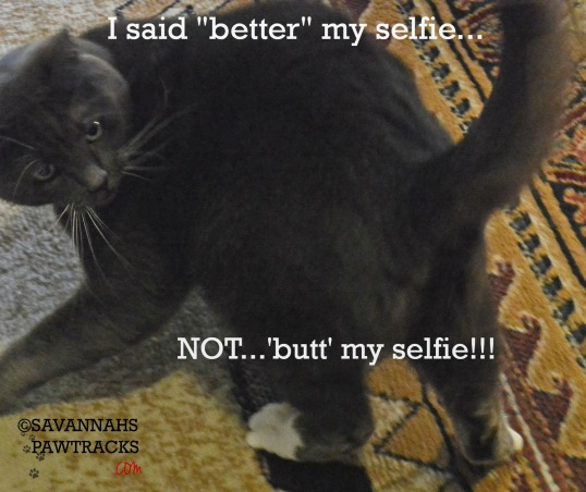 Savvys butt selfie