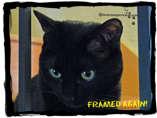 TKS framed again