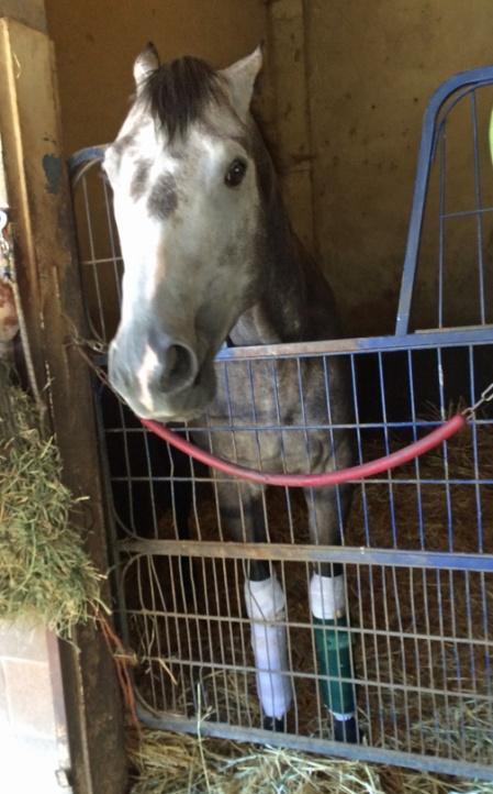 horse buddy ed s