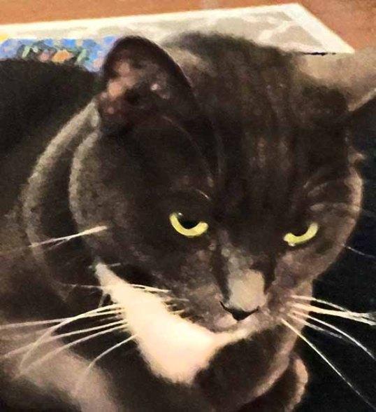 This is my Savannah stare—intense huh?