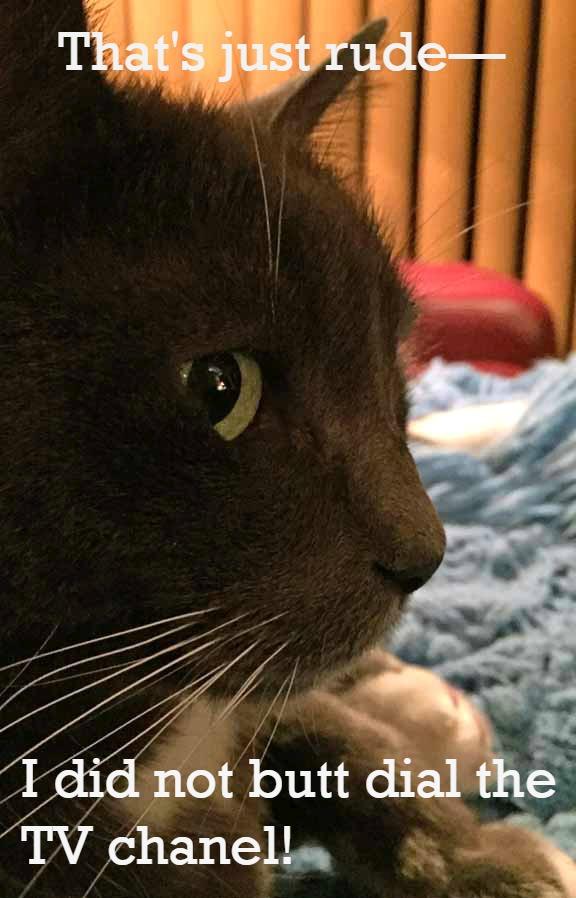 Friday Cat Memes Are Back   Savannah's Paw Tracks