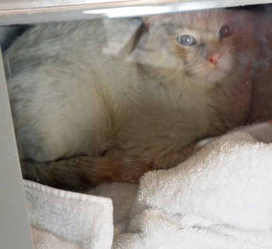 Feral mancat terrified after neuter