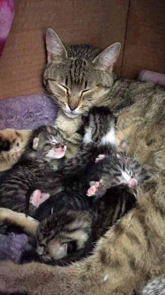 Specialicious kitty kitten toes