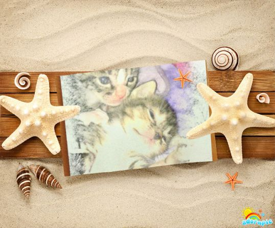 Kittens at the beach