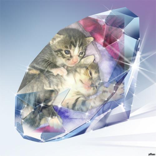 Kitten diamonds in the rough