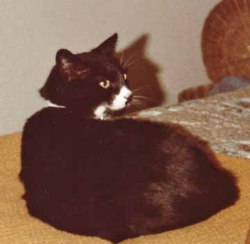 Squeeky the tuxie girl lived to 19