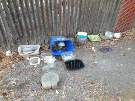 cat-feeding-station-adobe-creek