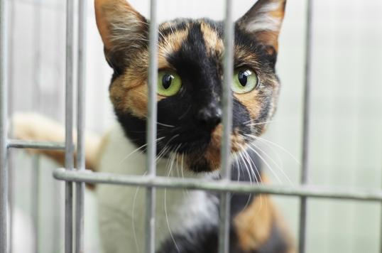 cat quarantined