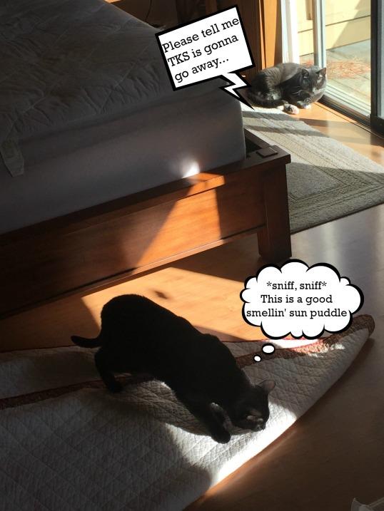 TKS sniffs sun puddle