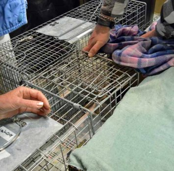 traps lines up, sides protected for possible escape