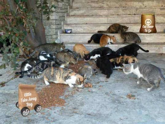 "No community cat gets a ""take away"" bag"