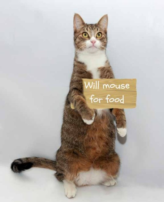 Just take me home with you and I will clean up your mousies