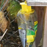 have to control flies and wasps