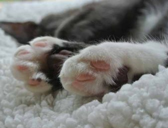 Pink jelly bellies