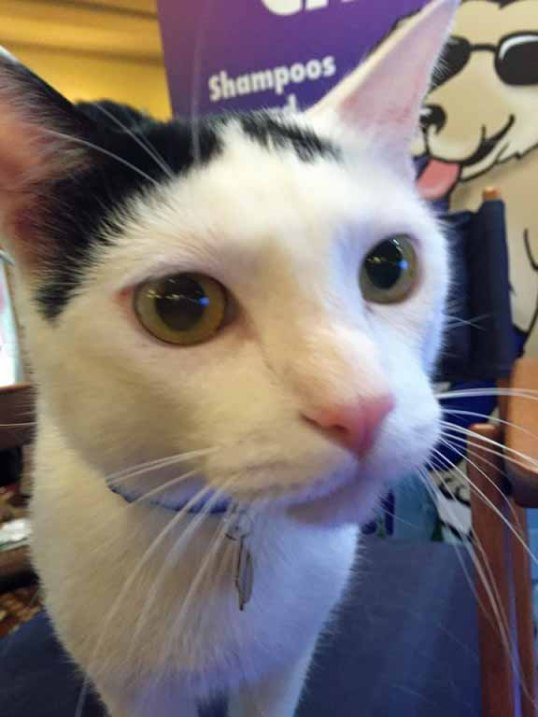 Ricky Cat Model