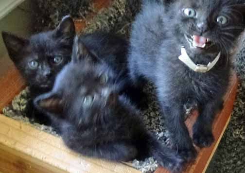 Where's my kitten milk??!!