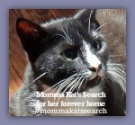 Momma kats search badge