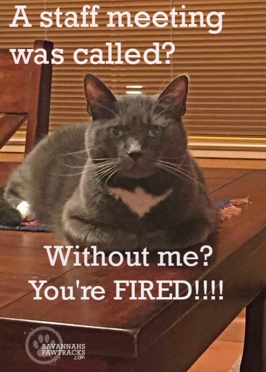 you are fired final