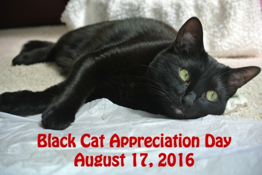 black cat appreciation day 2016