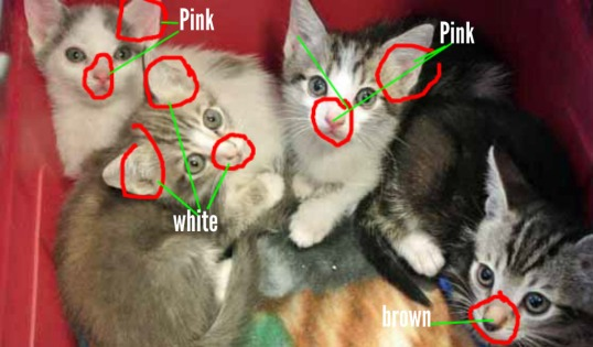 Notice the lack of color in the one kitten