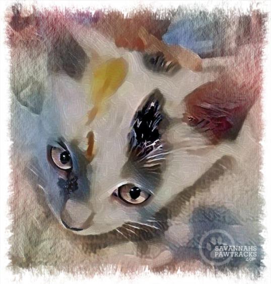 kitten selfie 3