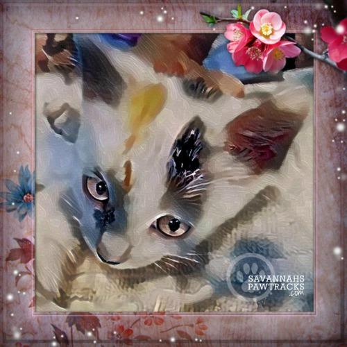 kitten selfie 2