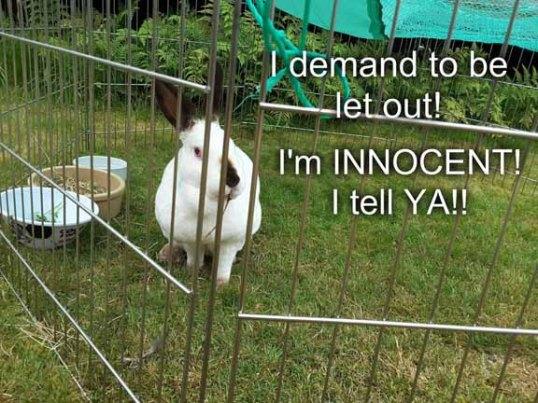 Speedy in jail