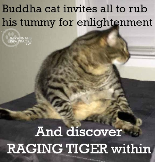 buddha-cat-invites