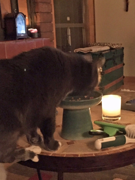 If peeps can dine by candle light, why not me?